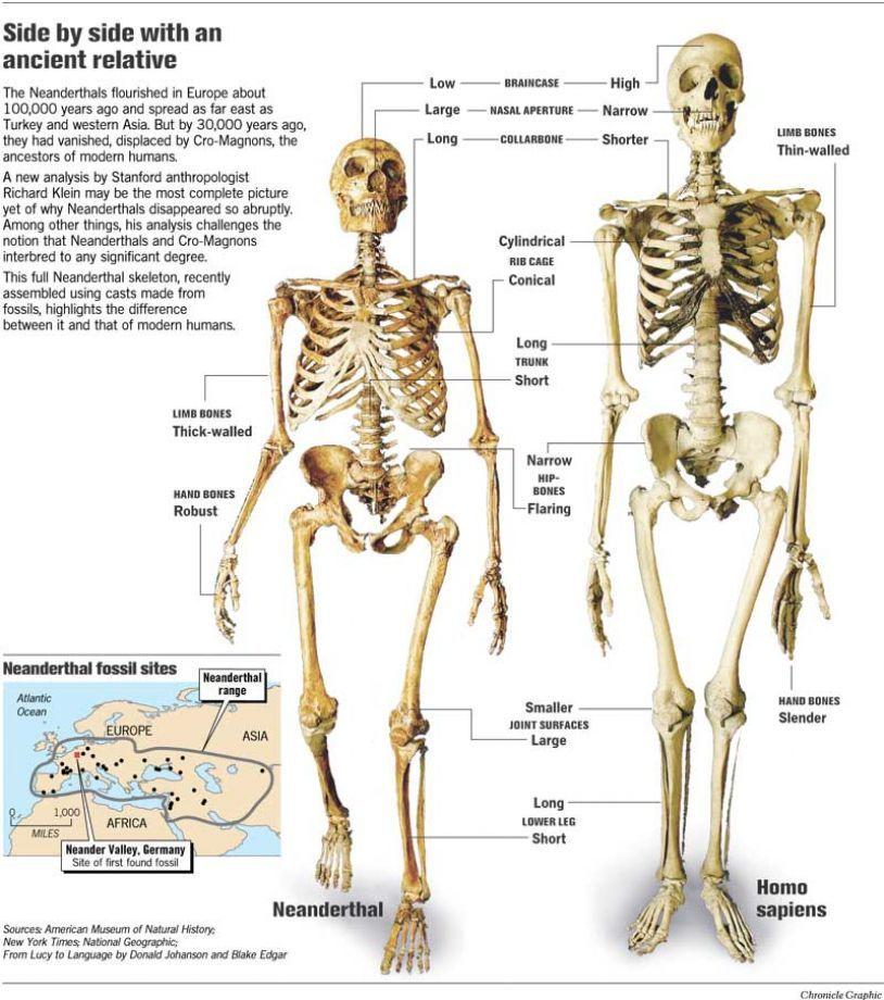 neandertal body vs cro magnon pesquisa google genetics - 814x920, Skeleton