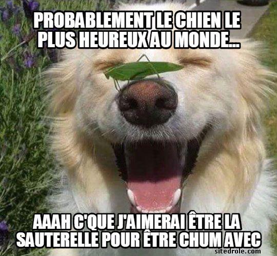 Probablement Le Chien Le Plus Heureux Au Monde Chien Image Drole Animaux Photo Drole Animaux