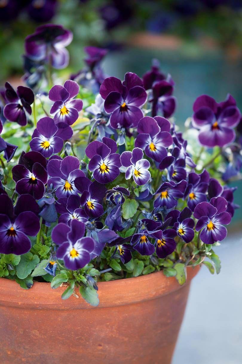 Pin by Lambrini Kouvaris on Garden Pinterest Plants Beautiful