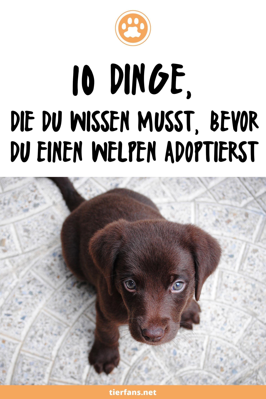 Pin Auf Hunde Tipps Tricks Erziehung Ratgeber