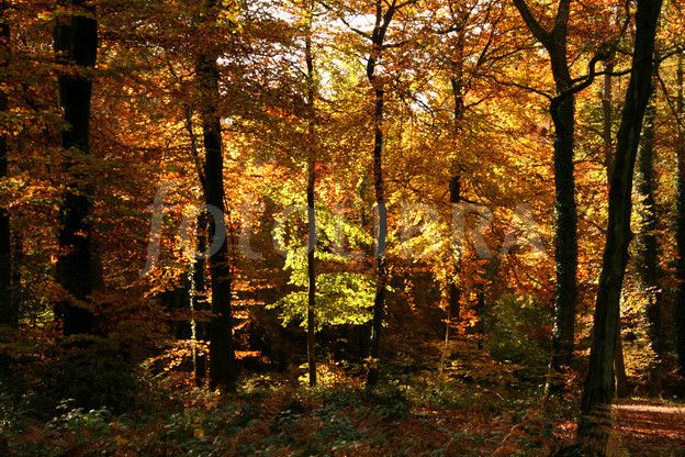 Autumn in the Forest of Dean~~~ | Forest of dean, Forest, Gloucestershire