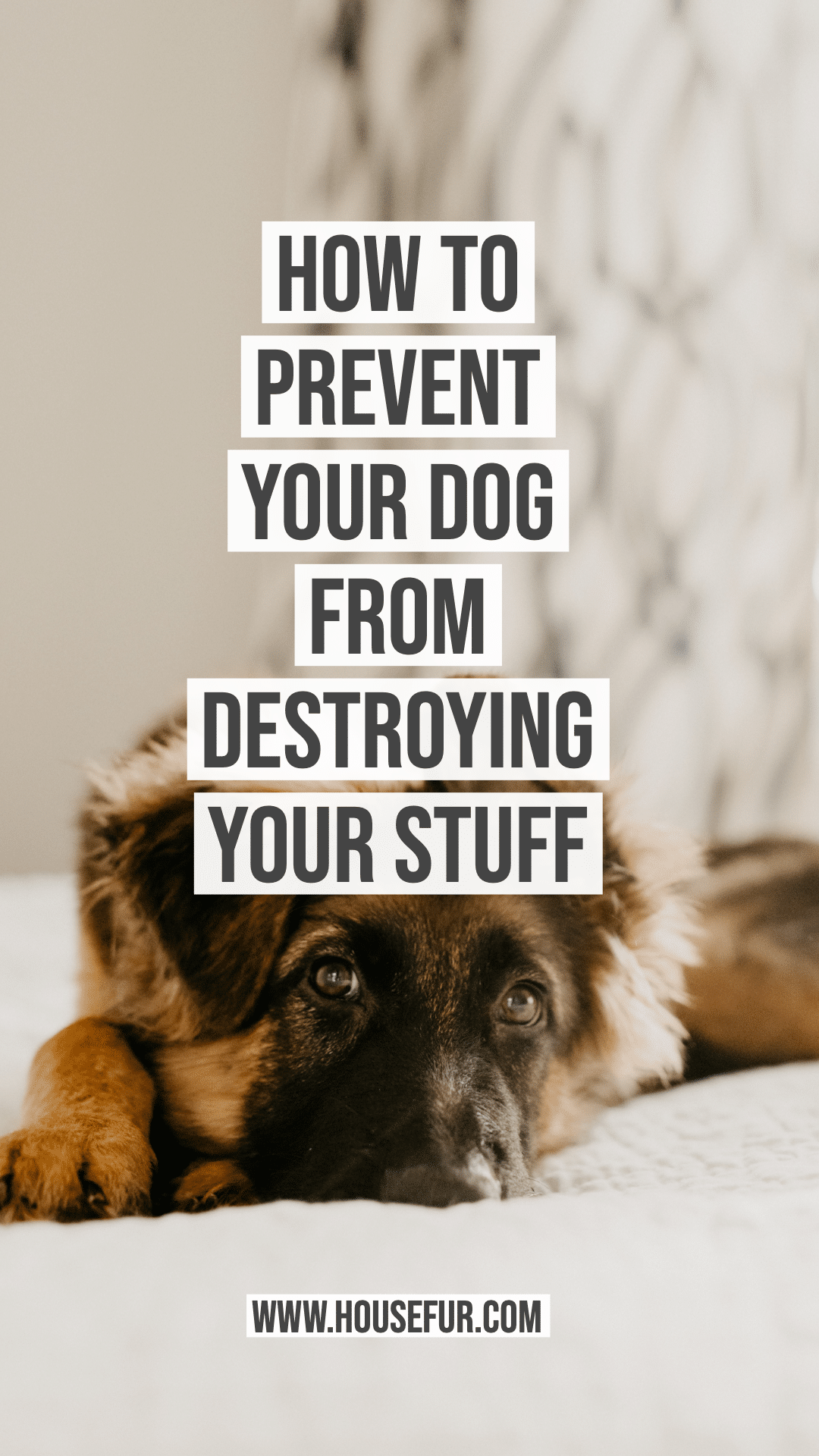 How to Prevent Your Dog from Destroying Your Stuff in 2020