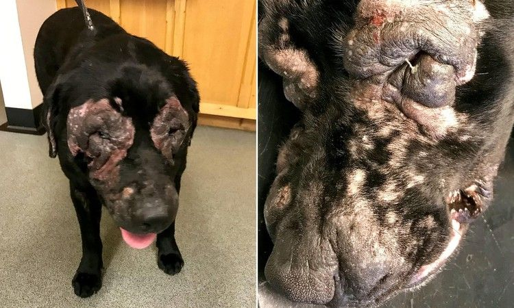 Owner Who Didn T Treat Dog S Skin Condition Banned From Keeping