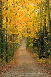 New England Dirt Roads | ... dirt road country lane and golden trees in fall, White Mountains, New