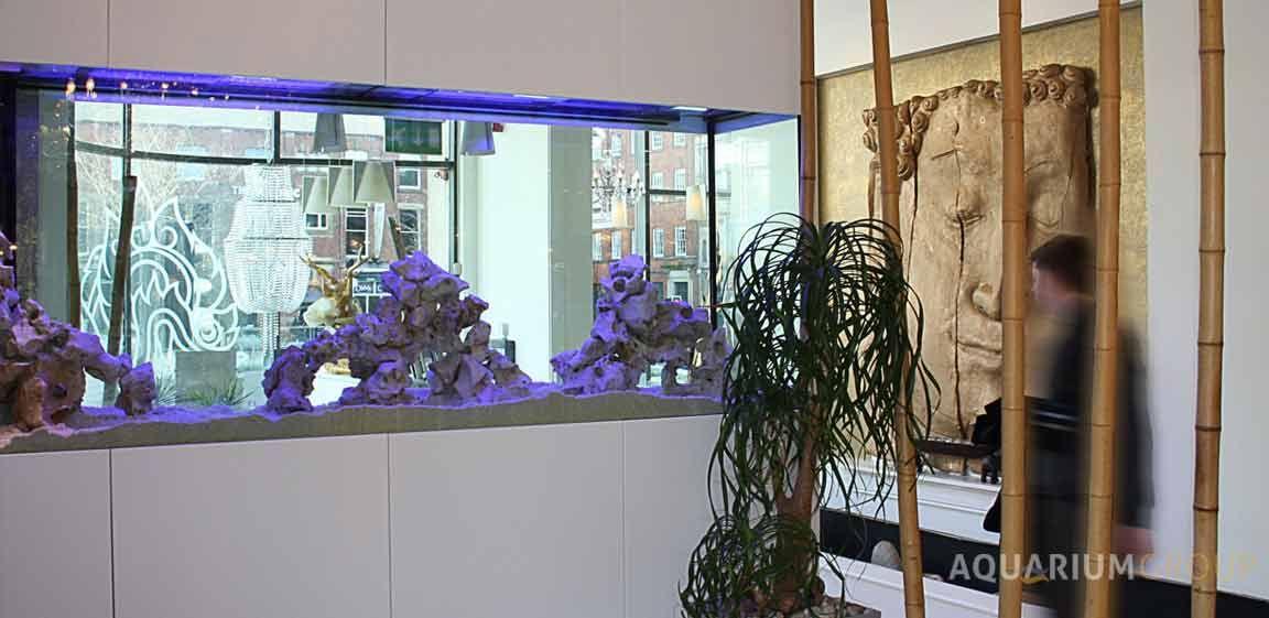 Living Room Aquarium Ideas Google Search Dream Aquariums Pinterest Aquariums Aquarium