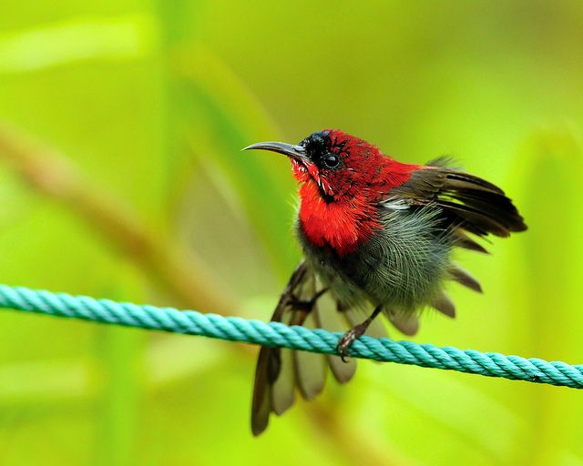 Sunbird circus | Flickr - Photo Sharing!