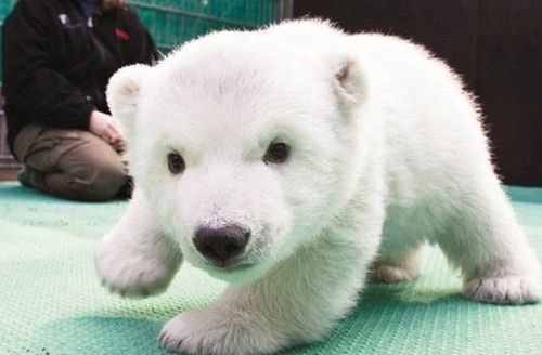 brokenunderstars:  No one ever said babies weren't cute.  Seal,...