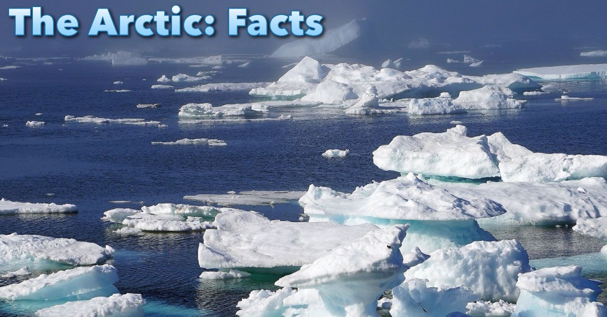 The Arctic Facts For Kids Information, Pictures & Video