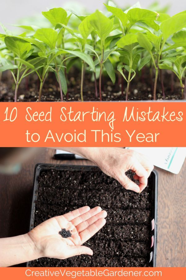 10 Common Seed Starting Mistakes to Avoid This Year