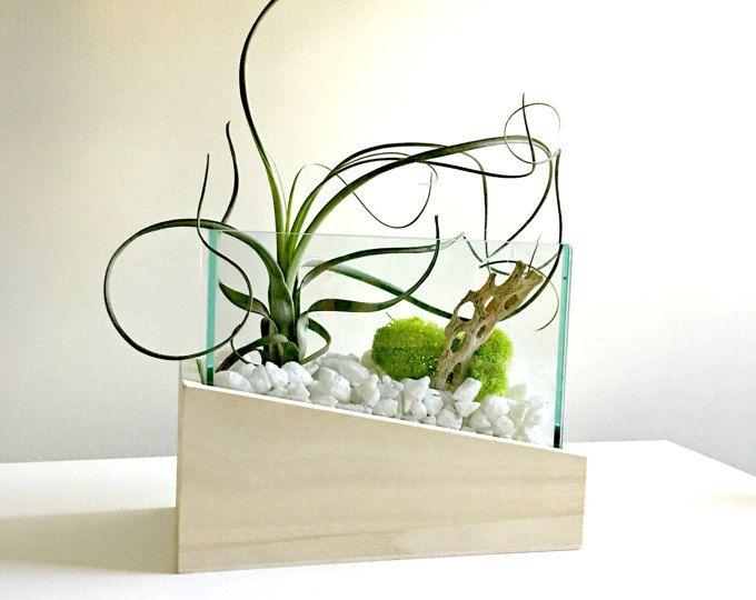Regalo terrario - vidrio florero vida decoración DIY kit - de media - decoracion zen