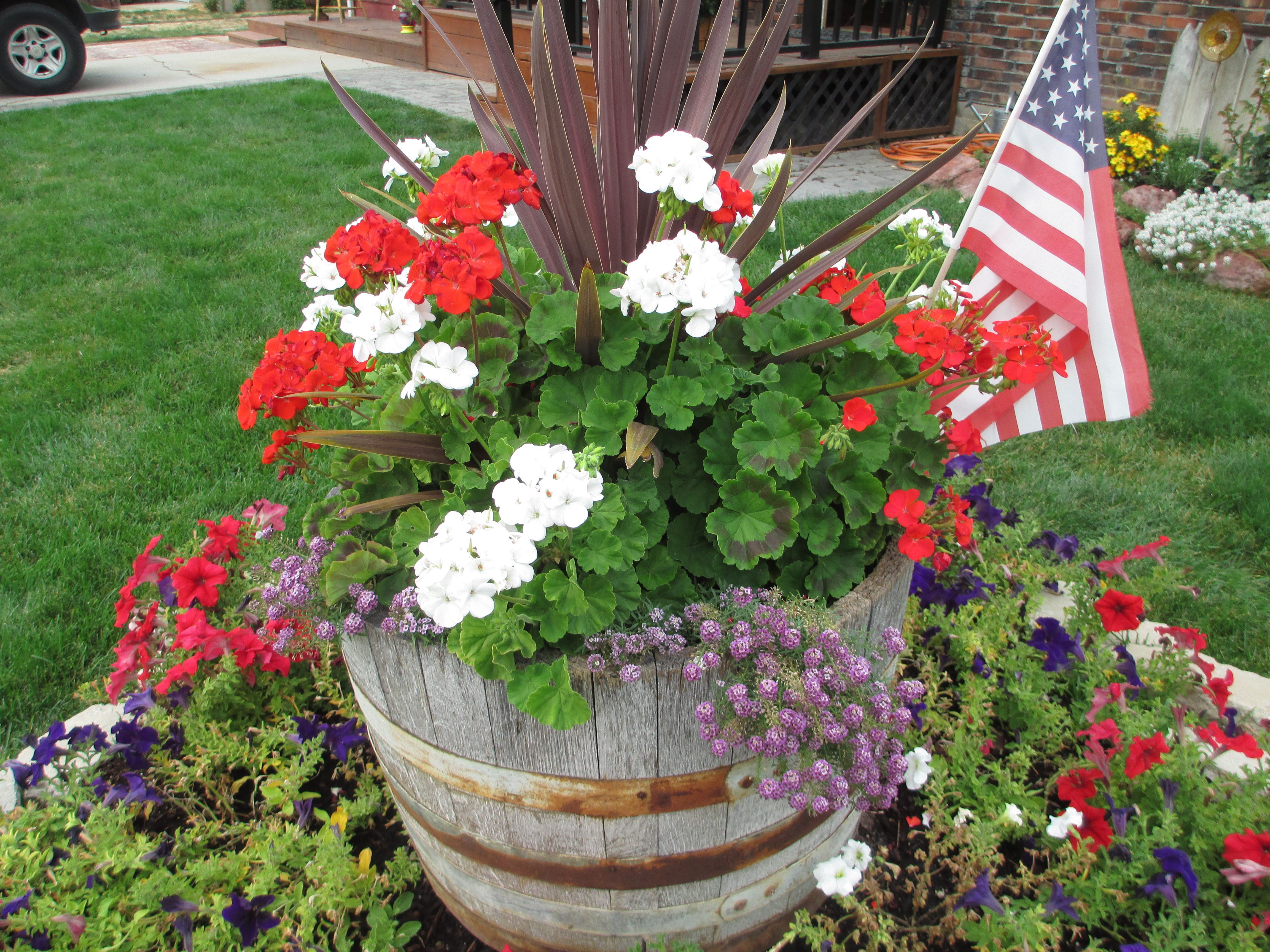 Such a perky pot of flowers covering the tree stump in our front
