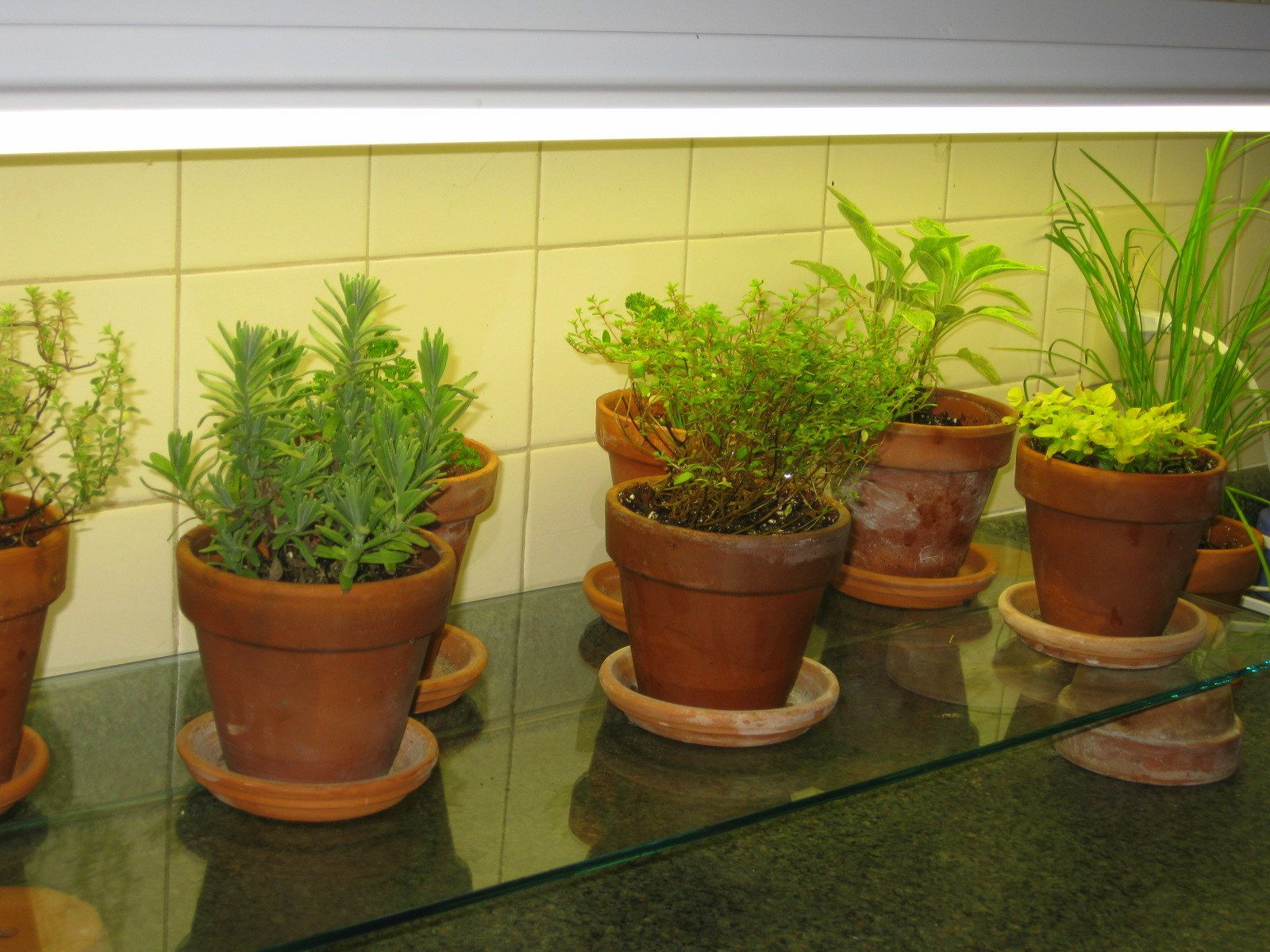 Gl Shelf Under Fluorescent Lights In Kitchen I Like The Way That It Is Suspended Off Counter By Upside Down Pots