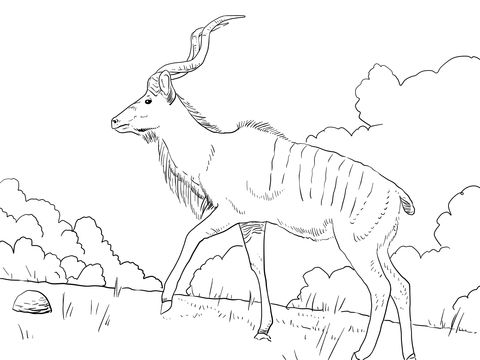 Superb Male Greater Kudu Coloring Page From Greater Kudu Category. Select From  27252 Printable Crafts Of Cartoons, Nature, Animals, Bible And Many More.