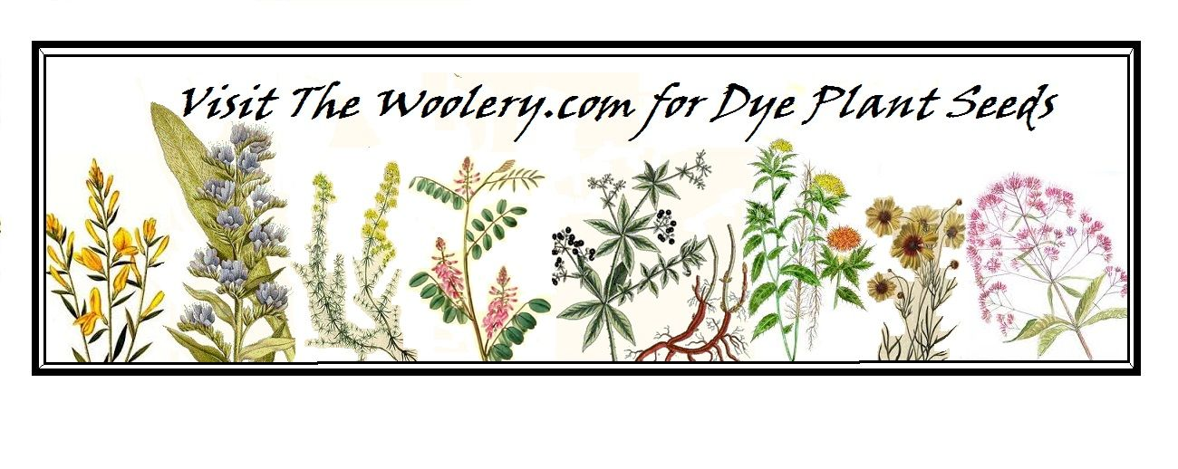dye plants indigo, madder, bugloss,, dyers broom, , calliopsis, Joe Pye weed…