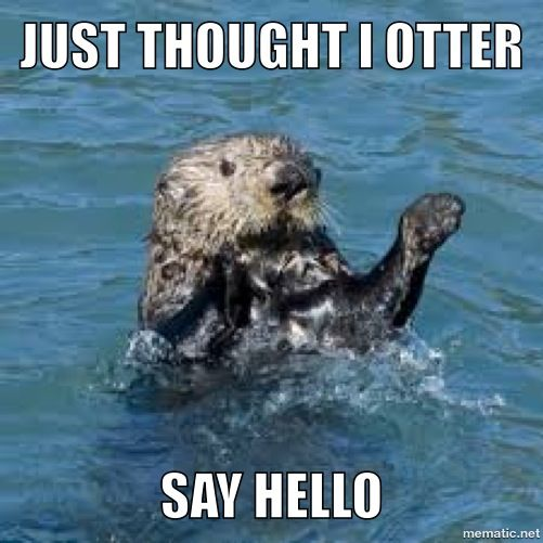 Thought I Otter Say Hello Funny Animals Cute Animals Animals