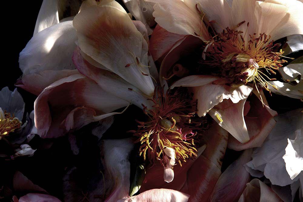 Andrea Gentl, Natura Morta | EyeSwoon