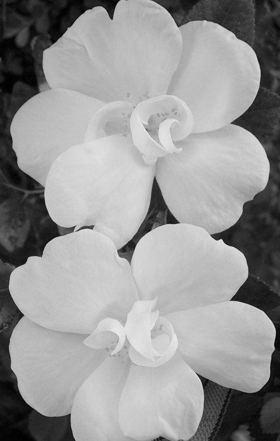 Flores en blanco y negro, naturaleza, fotografía floral