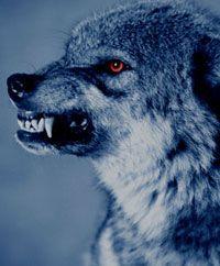echte weerwolf dating