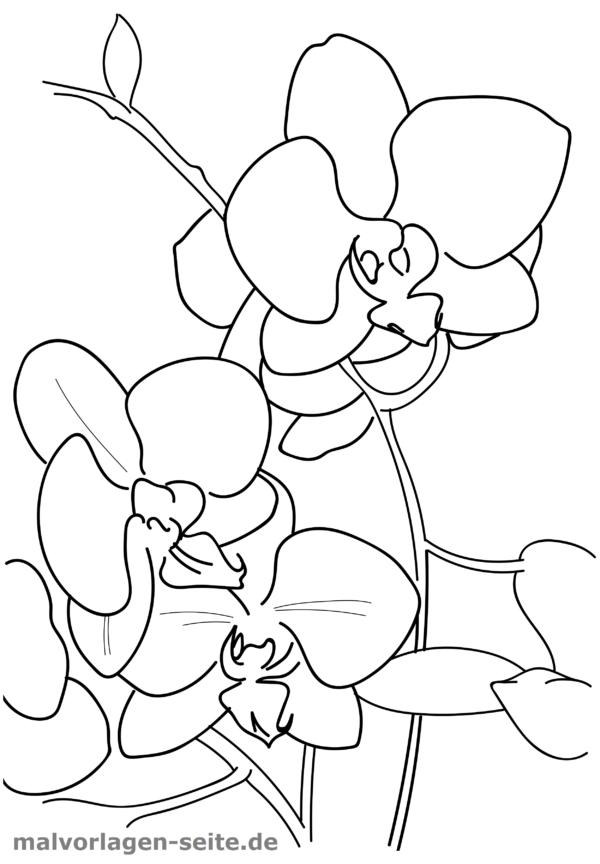 malvorlage  ausmalbild orchideen malen ausmalen orchid
