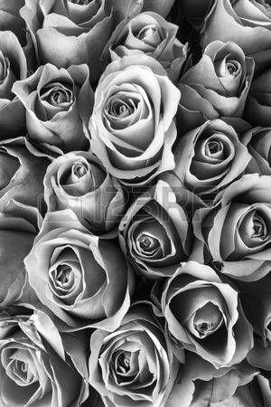 stock photo floral black