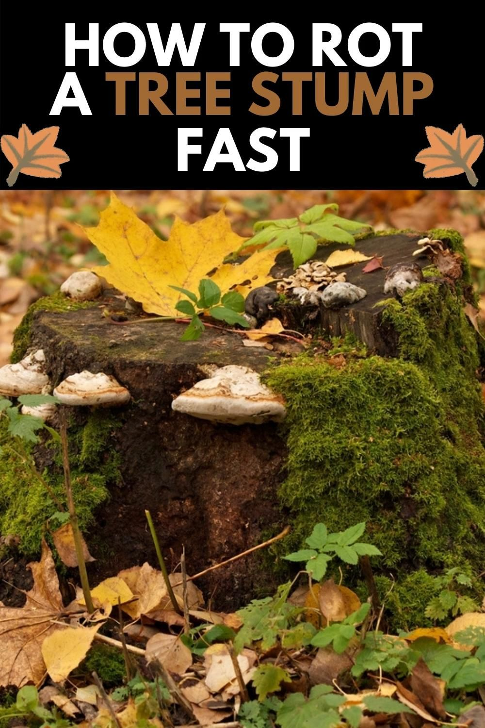 How To Rot A Tree Stump Fast Video In 2020 Small Backyard Landscaping Gardening Supplies Tree Stump