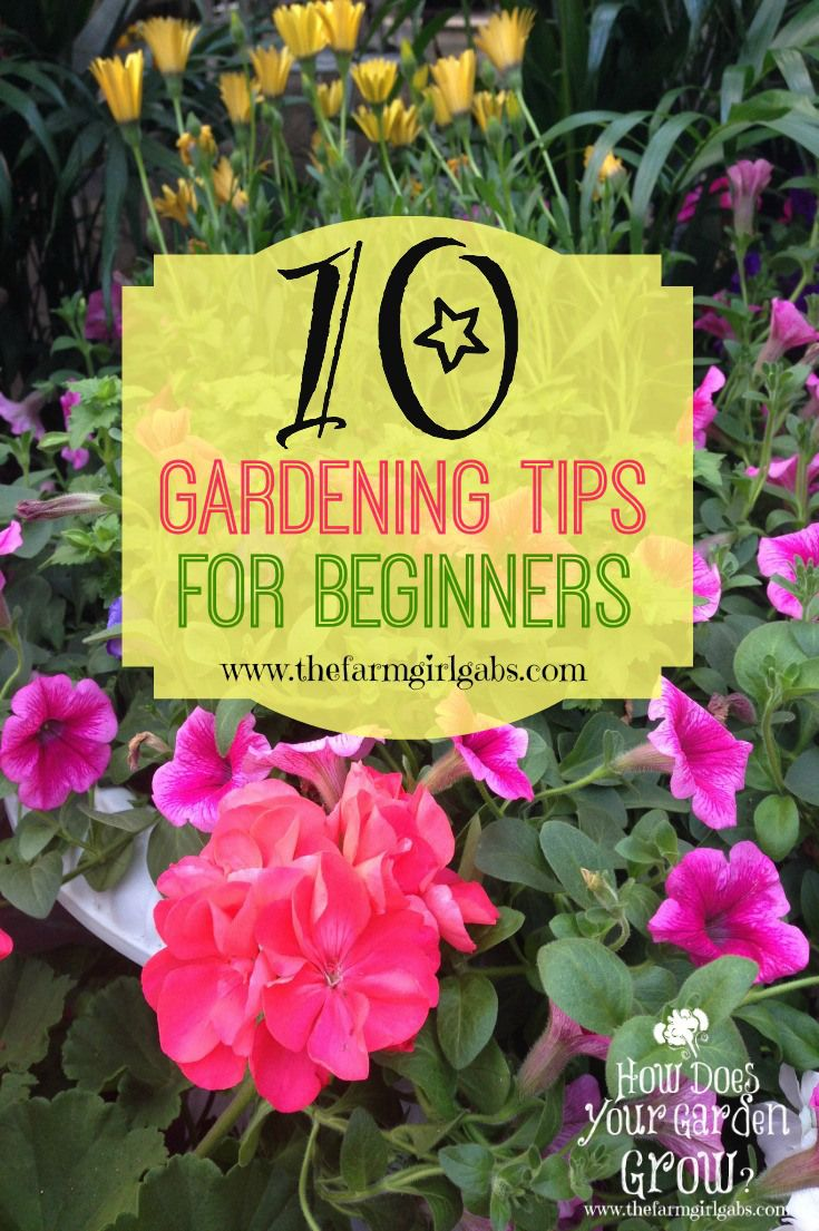 10 Gardening Tips For Beginners With Images Beautiful Flowers