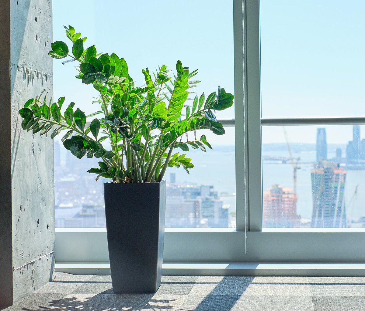 How To Choose The Right Plants For Your Office | Plants, Plant delivery,  Indoor plants
