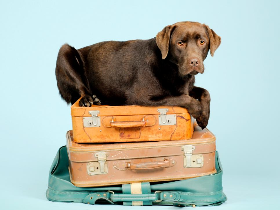 New Rules for Travel in 2020 HGTV in 2020 Pet travel