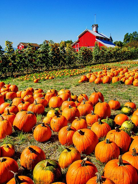 Fall and halloween events, festivals: ventura, camarillo, thousand.