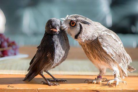 Bild könnte enthalten: Vogel und im Freien