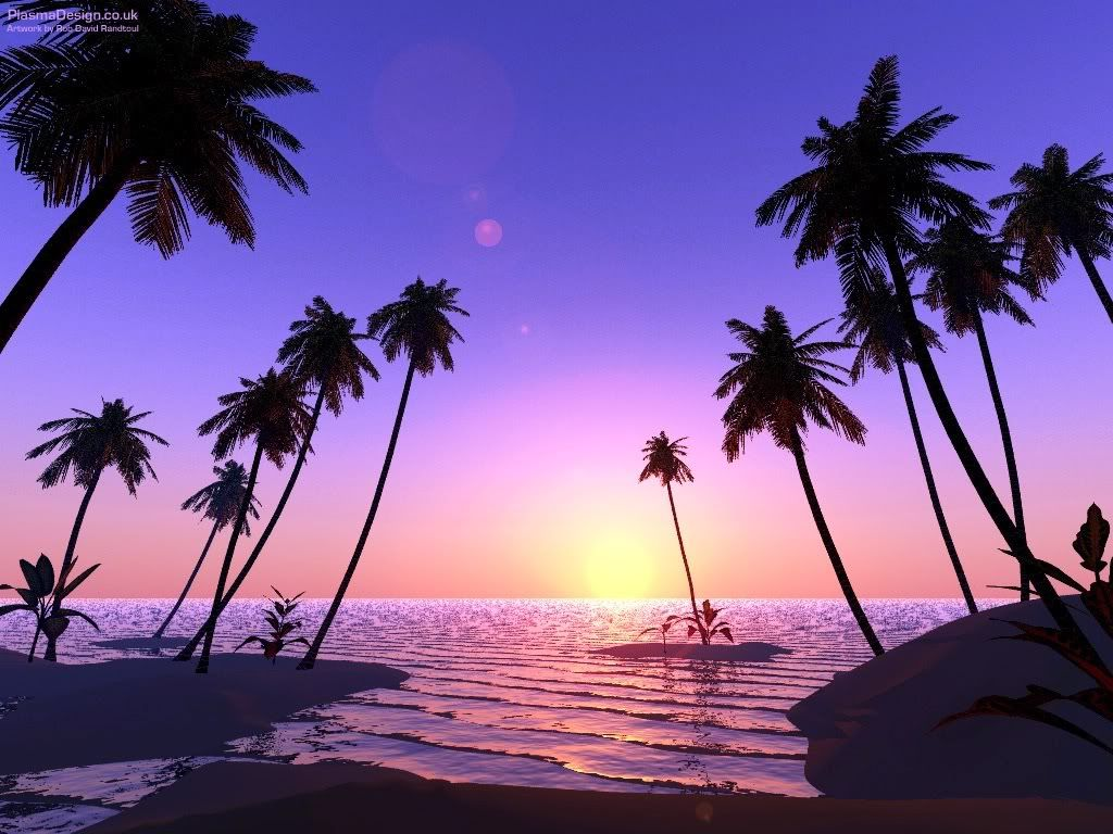 Image For Beach With Palm Trees And Sunset