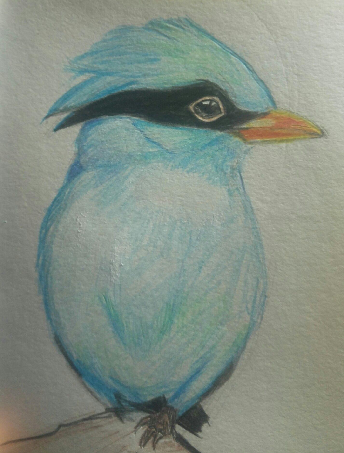 Blauer Vogel Blauer Vogel Vogel Buntstifte