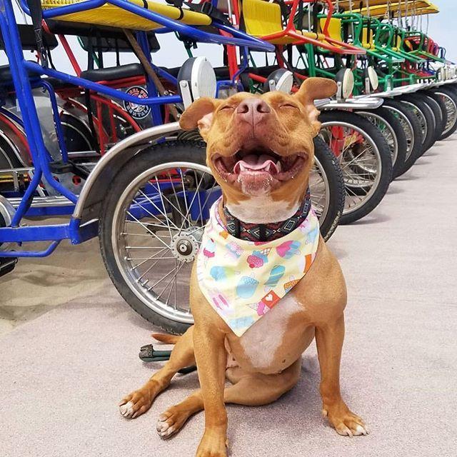 Soaking Up The Sun Malibusmama Urban Dog Dog Solution Dogs