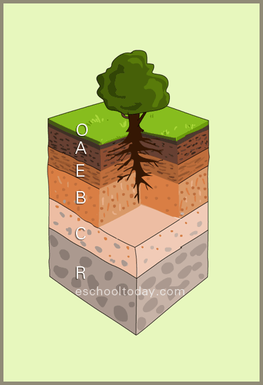 Soil profile is the description of the various layers that for Why the soil forms layers in water