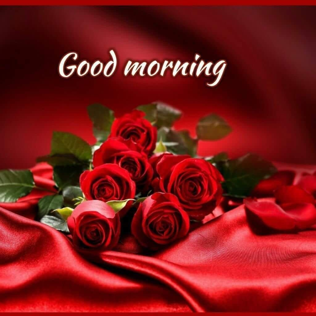 Good Morning Red Roses Beautiful Roses Flowers