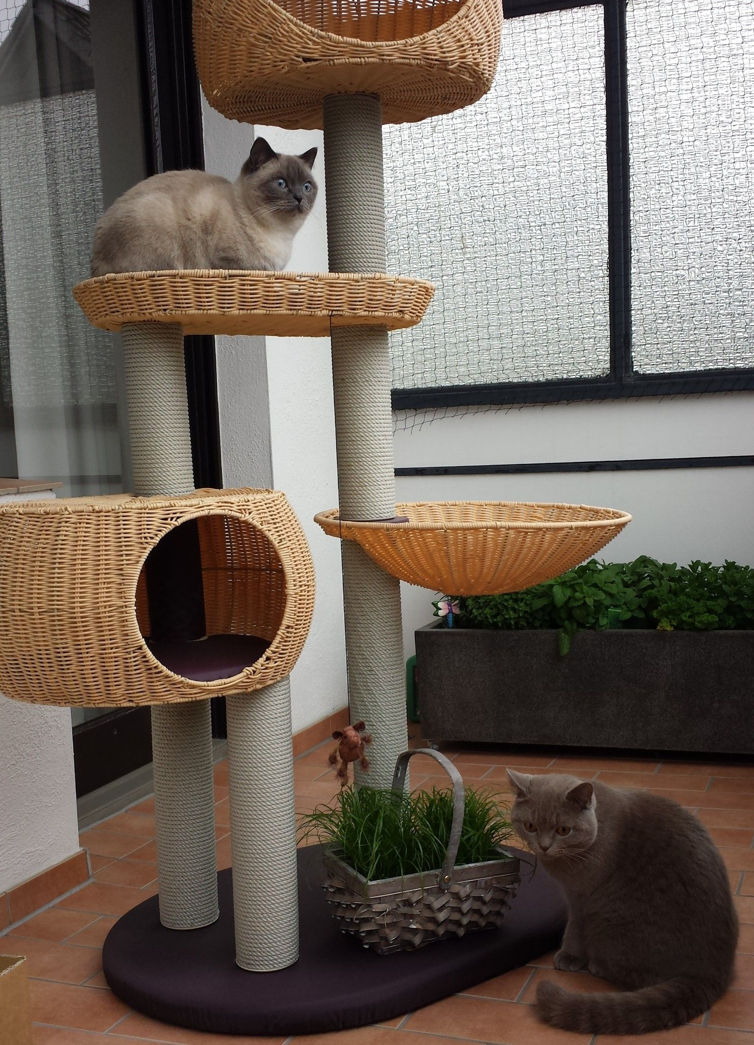 kratzbaum outdoor iii my cats pinterest outdoor kratzbaum britisch kurzhaar und kratzbaum. Black Bedroom Furniture Sets. Home Design Ideas