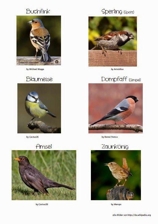 Kostenlose Arbeitsblätter Vögel Im Winter : Grundschule material kostenlos arbeitsblätter vögel