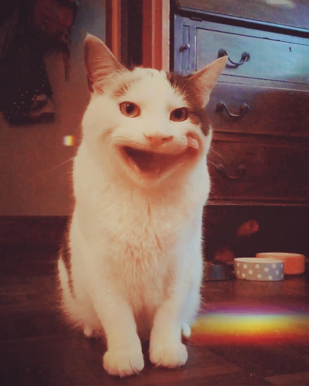 Very Polite Cat Cute Cats Cat Meme
