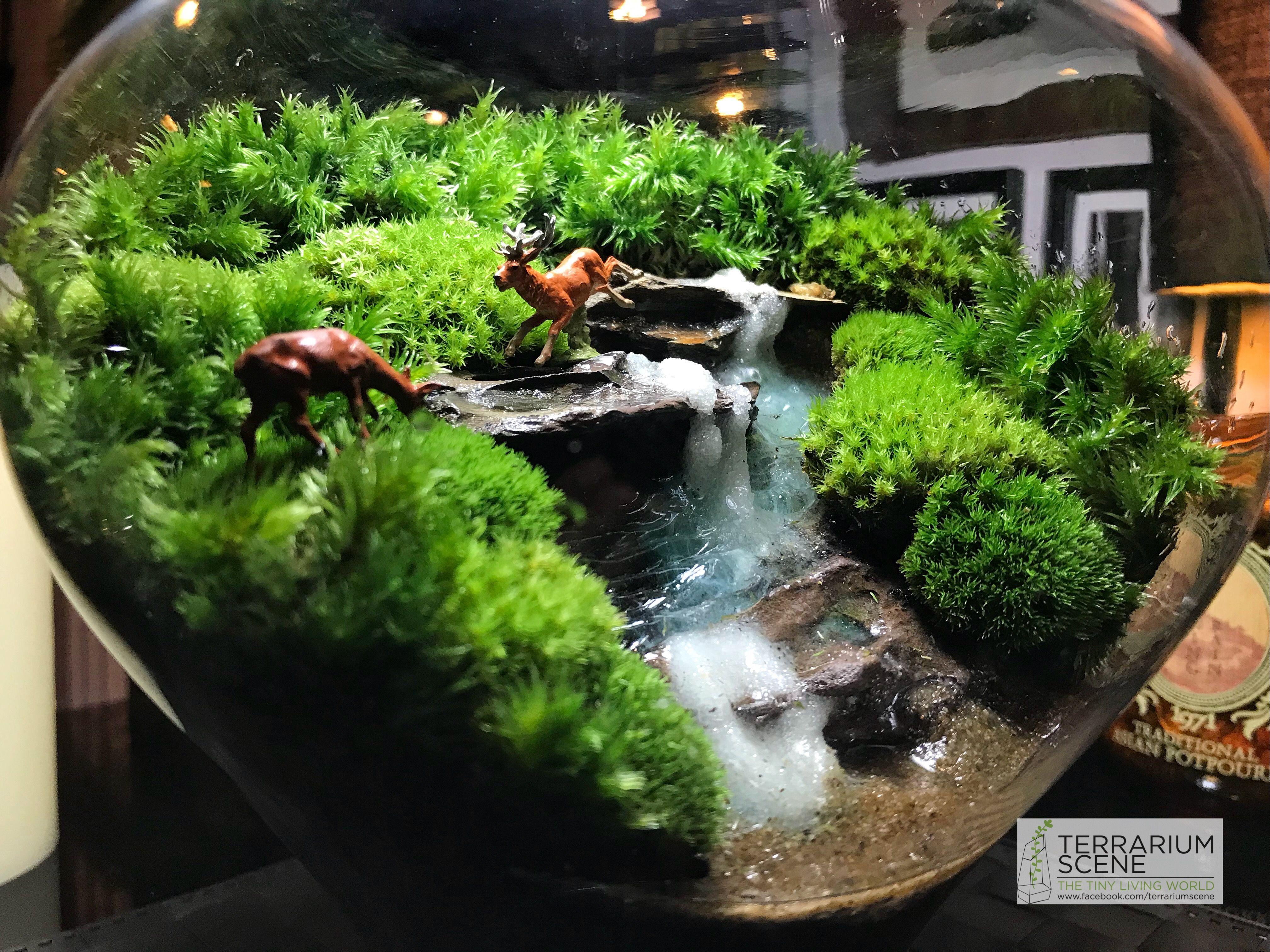 Pin by anthony on terrarium in pinterest terrarium