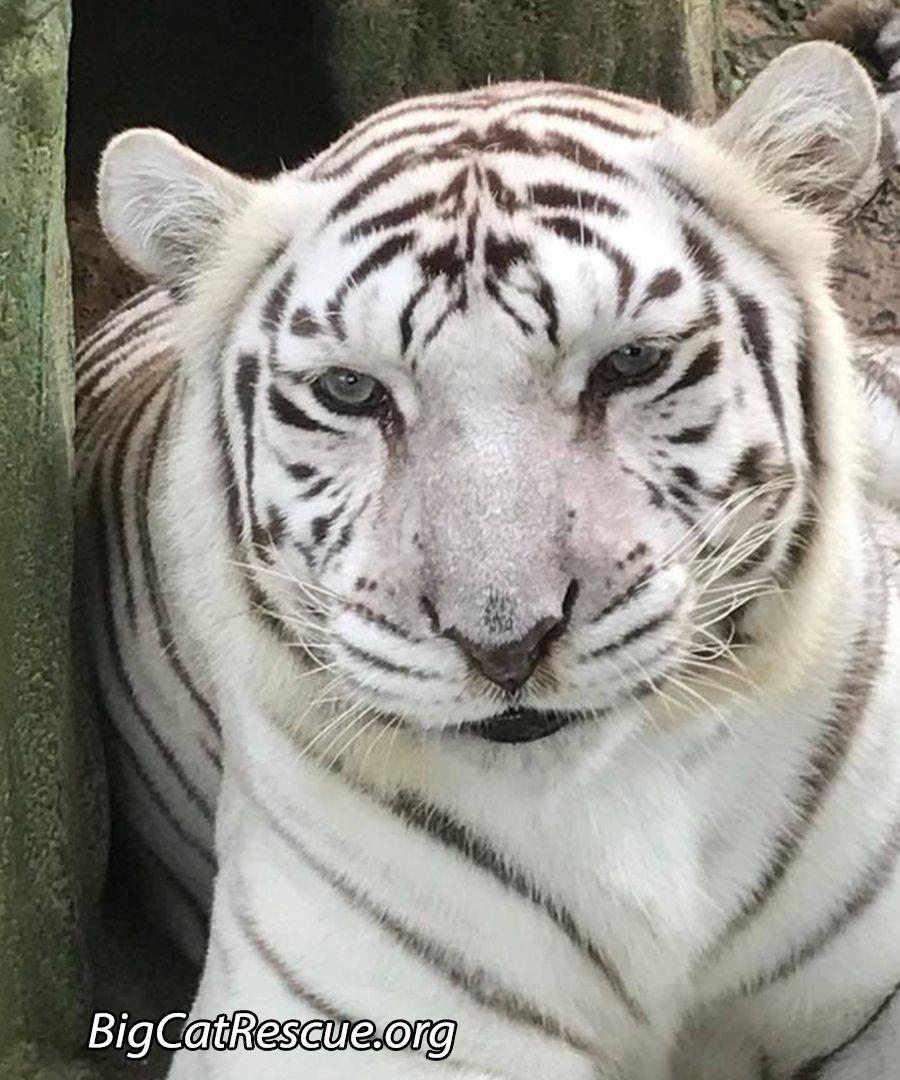 Sentencing Statement Big cat rescue, Wild cats, Cat facts