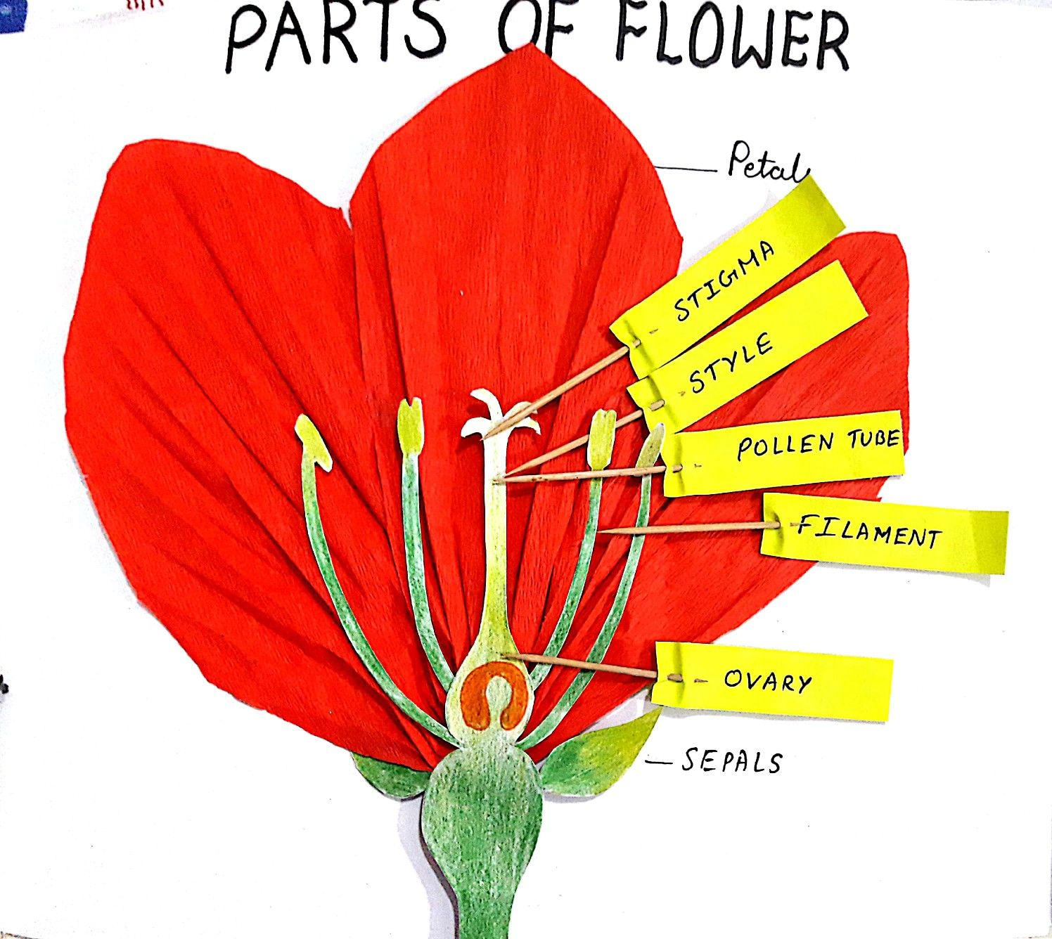 3D Parts of flower #flower #biology #scienceproject