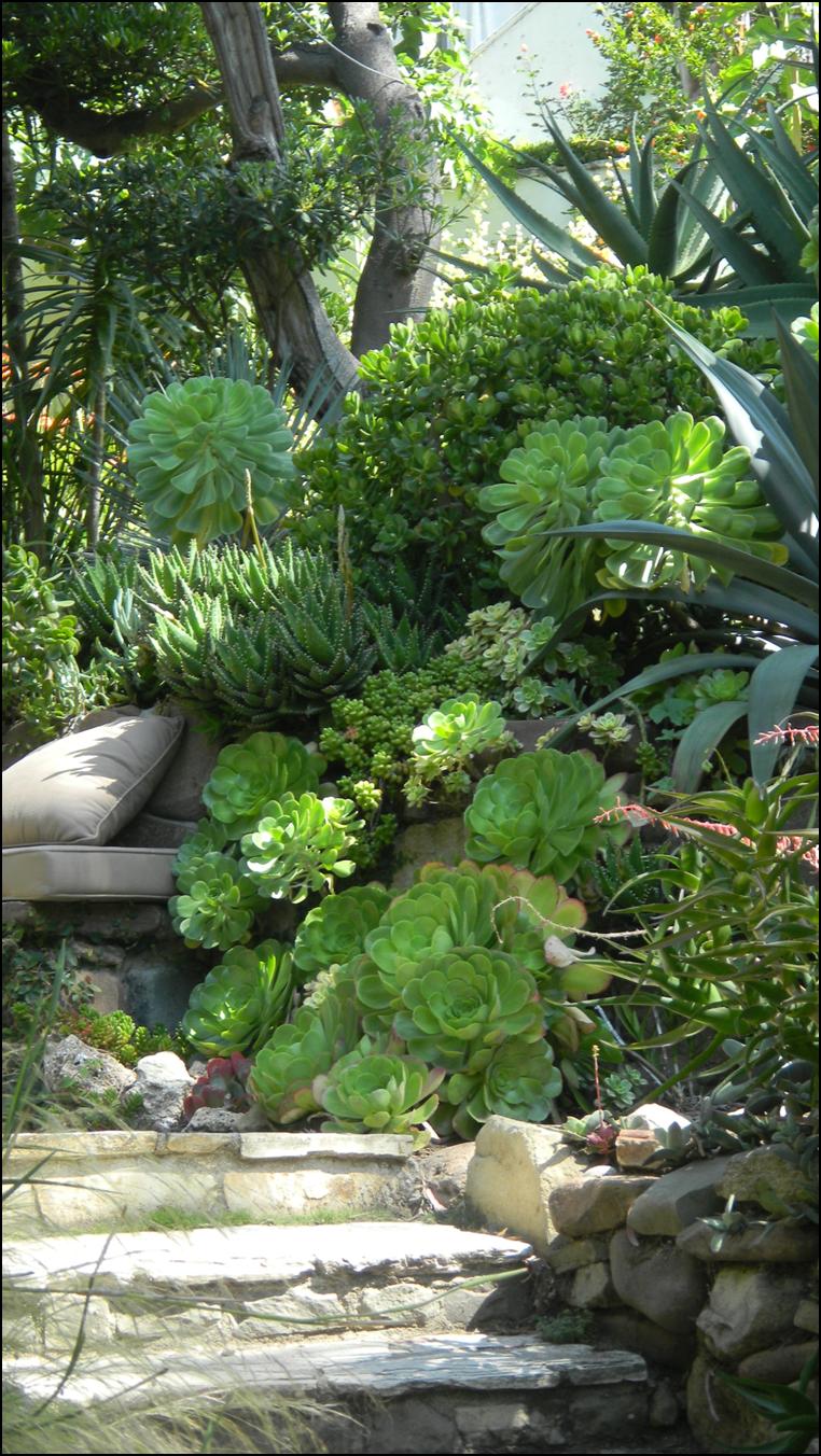 Solely Succulent Garden Ideas On Pinterest Succulents Succulent