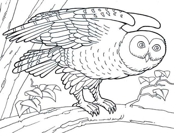 Animal Barn Owl Coloring Pages | 1 | Pinterest | Owl