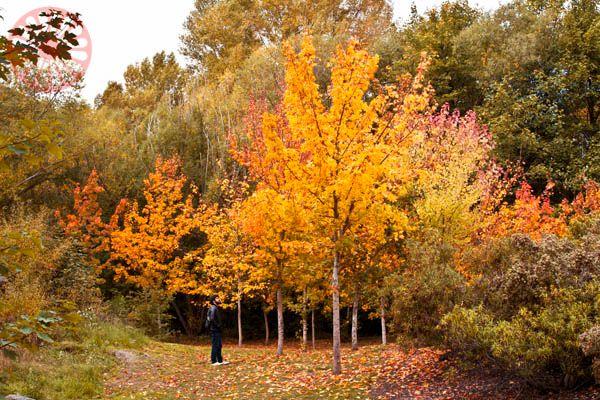 Autumn in Arrowtown - New Zealand