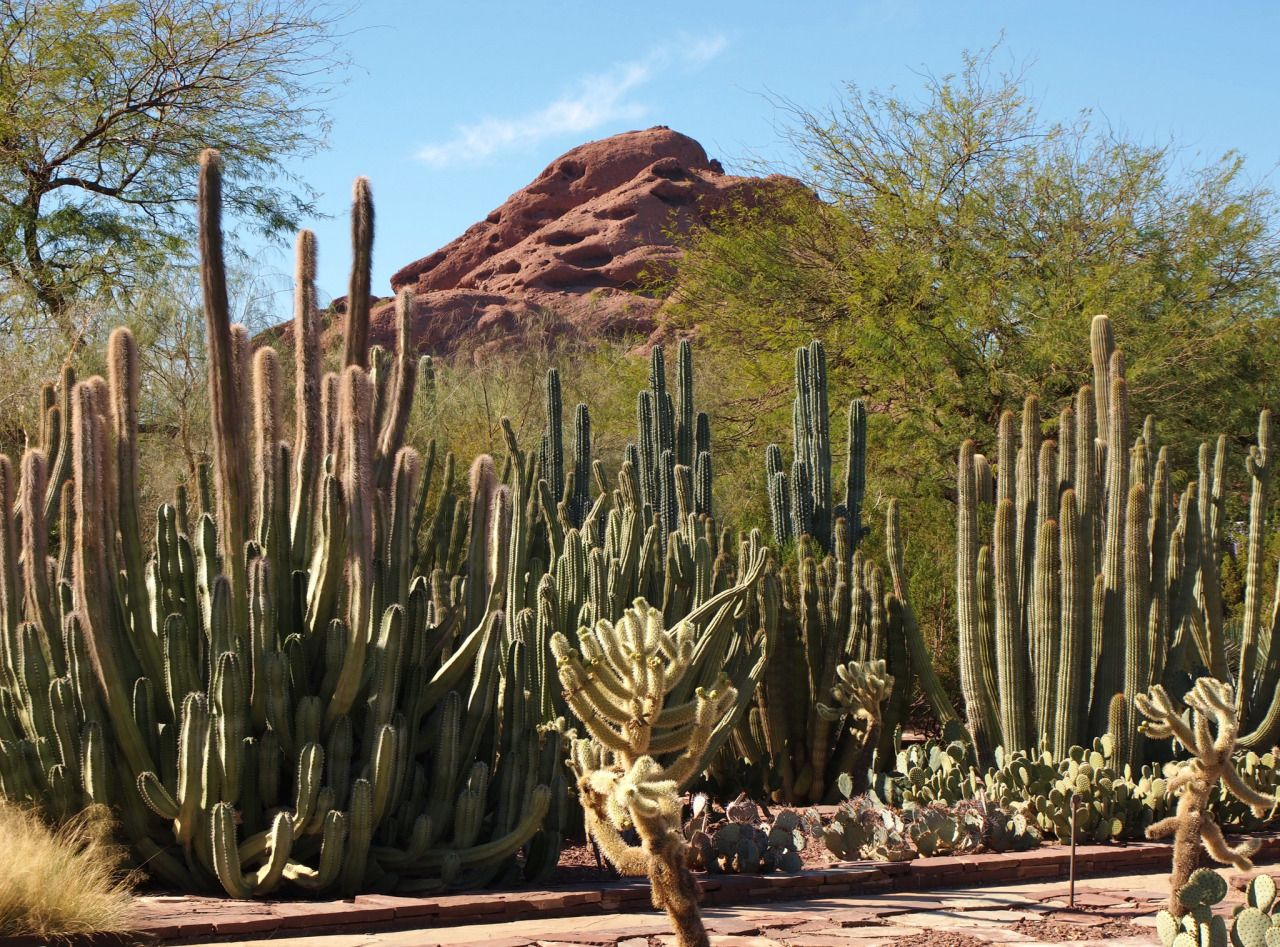 Desert Botanical Garden by Brule Laker Via Flickr: The Desert ...