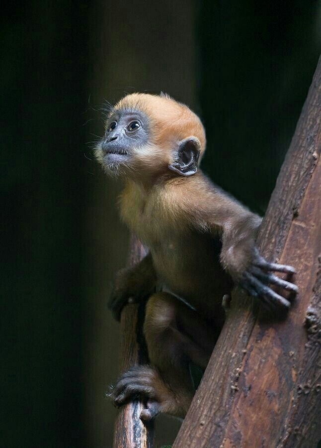 Affchen Babytiere Susse Tiere Wilde Tiere