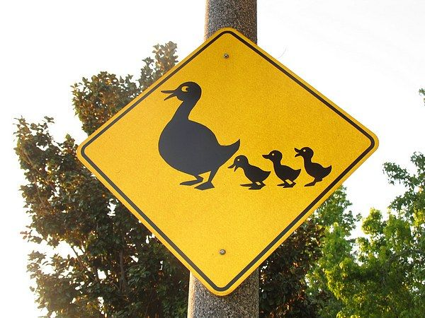 cutest duck crossing sign love it pinterest signs