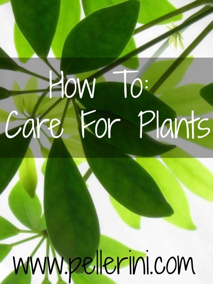 HOW TO CARE FOR PLANTS: I had a black thumb, I admit it.  Even succulents weren't safe with me.  But I love plants, so I did some research and learned how to effectively keep my plants alive and gorgeous!