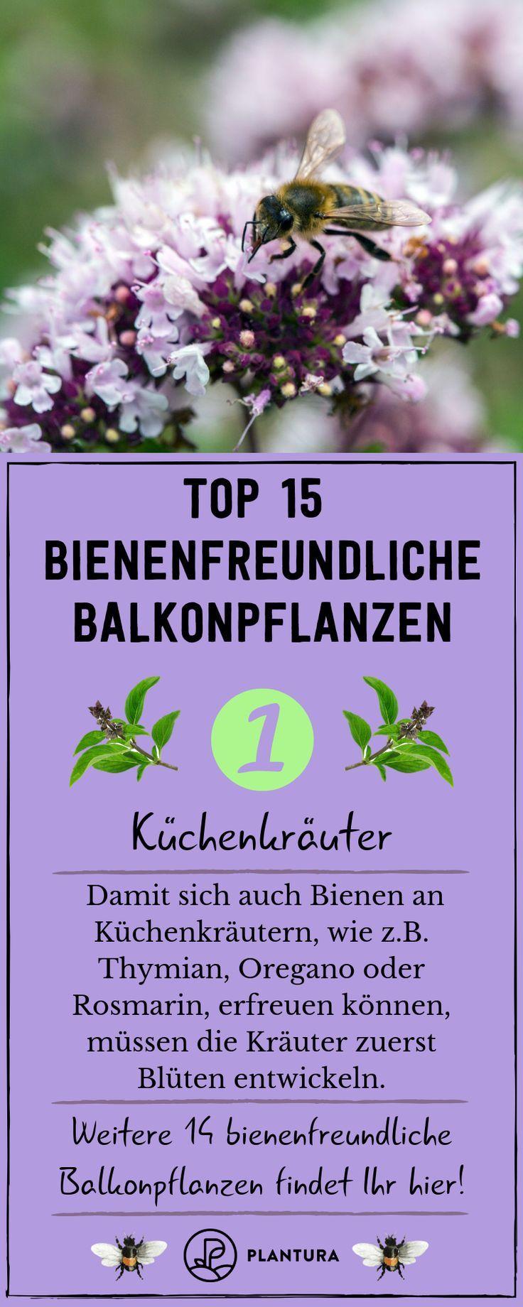 Bienenfreundliche Balkonpflanzen: 15 Balkonpflanzen für Bienen - Plantura
