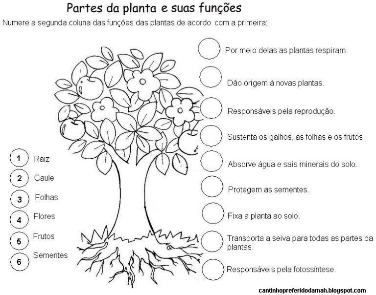 Atividades Sobre As Partes Das Plantas Partes Da Planta